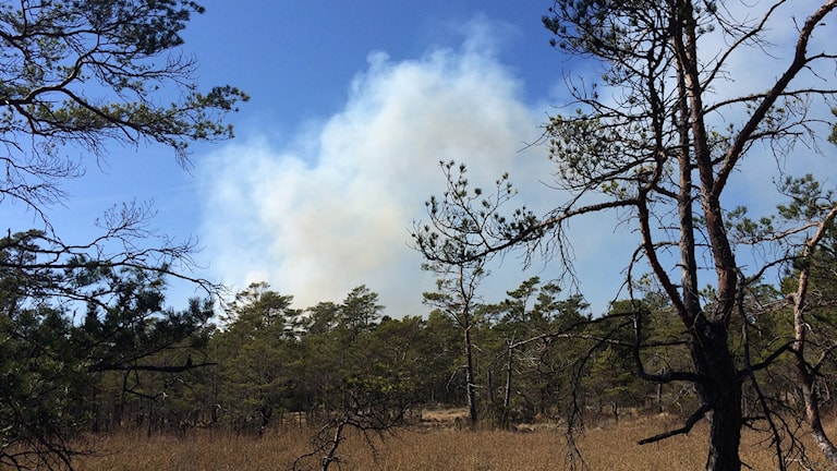 Skogsbranden i Vänge sprider sig. Foto:Patrik Annerud P4 Gotland
