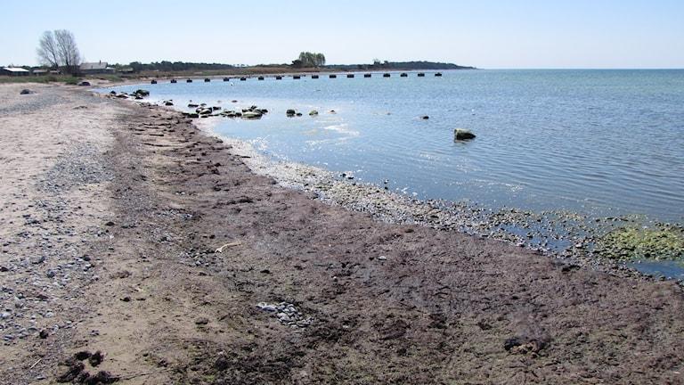 Släke på stranden i Kvarnåkerhamn.