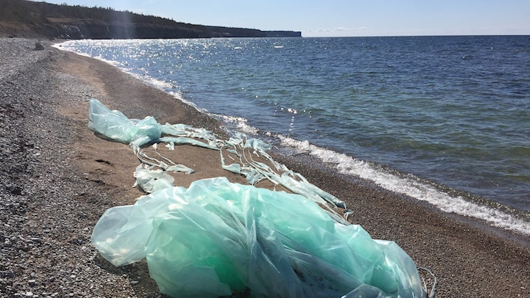 Plastic waste can be a source of microplastic in the sea.