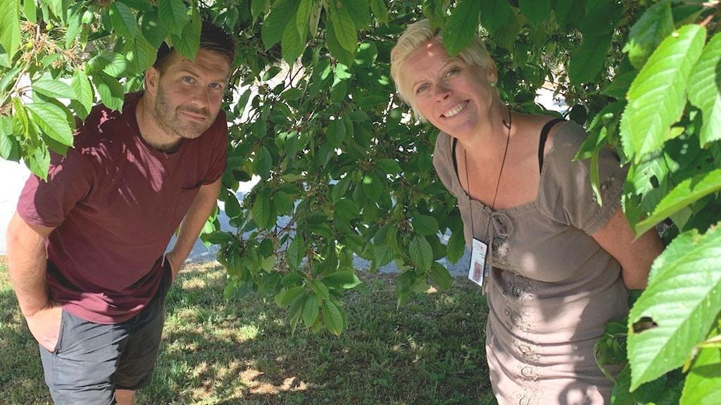 Två personer under ett träd