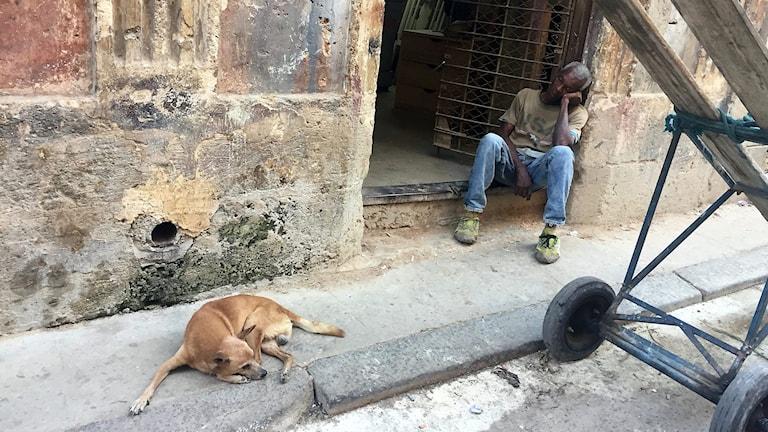 Hund och man sover i Havanna.