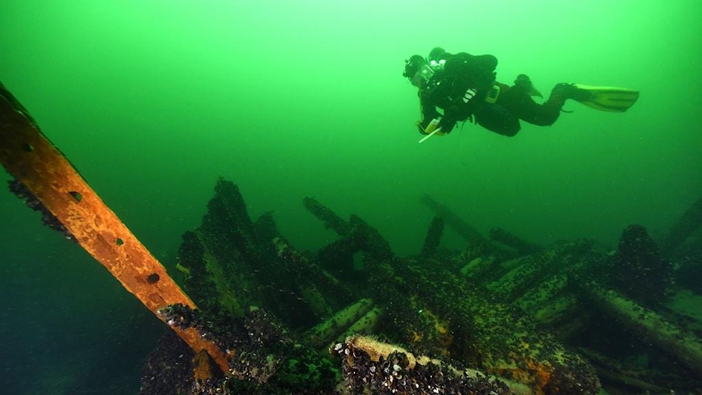 Jim Hansson Marinarkeologerna dyker på vraket Princess utanför Fårösund.