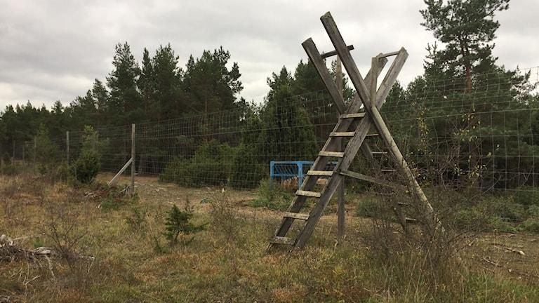 Gigantrisk stätta in till vilthägn östra Gotland. Foto: Katarina Hedström/Sveriges Radio.