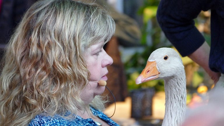 Mari Winarve och den gula amerikanska gåsen Karin