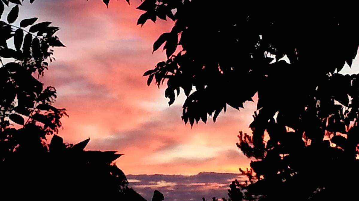 Rödfärgad himmel en sommarkväll