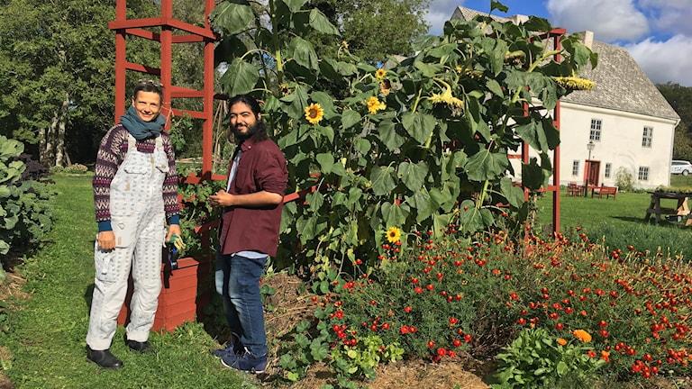 Trädgårdsmästare Kerstin Rosenkvist låter Danial Hormzinejad hjälpa till i trädgården