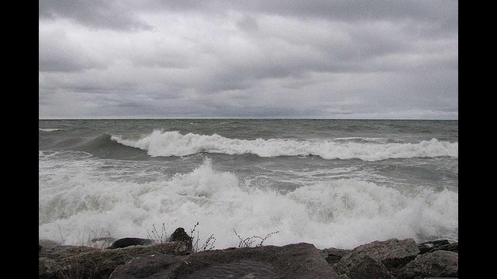 Stormvågor mot piren i Visby. Foto: Henrik Wallenius/SR Gotland