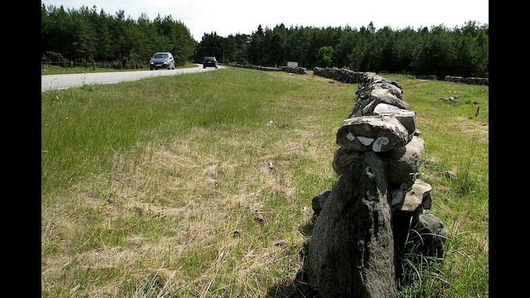Kulturväg med stenvastar på södra Gotland. Foto: Henrik Wallenius/SR Gotland