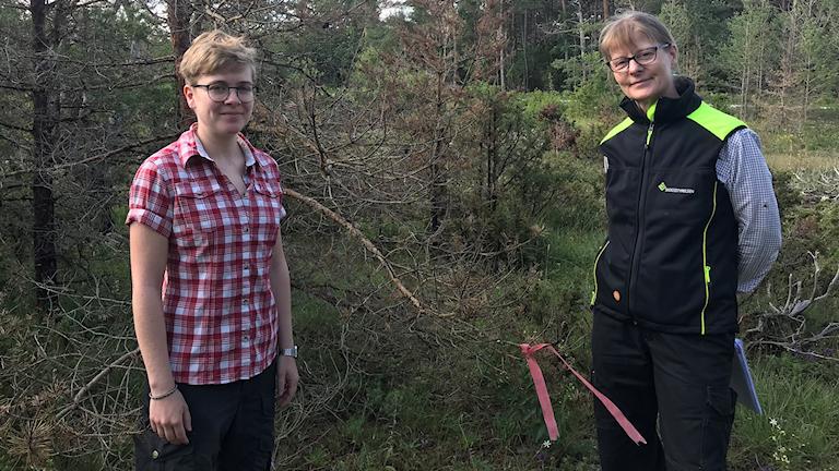 Laura Brodde, doktorand från SLU och Karin Wågström från skogsstyrelsen står framför en tall som är infekterad av Diplodia Sapinea.