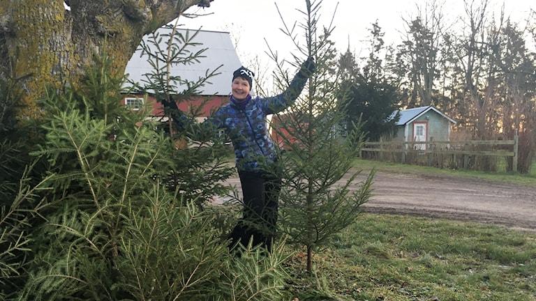 Kristina Björkén skänker julgranar.