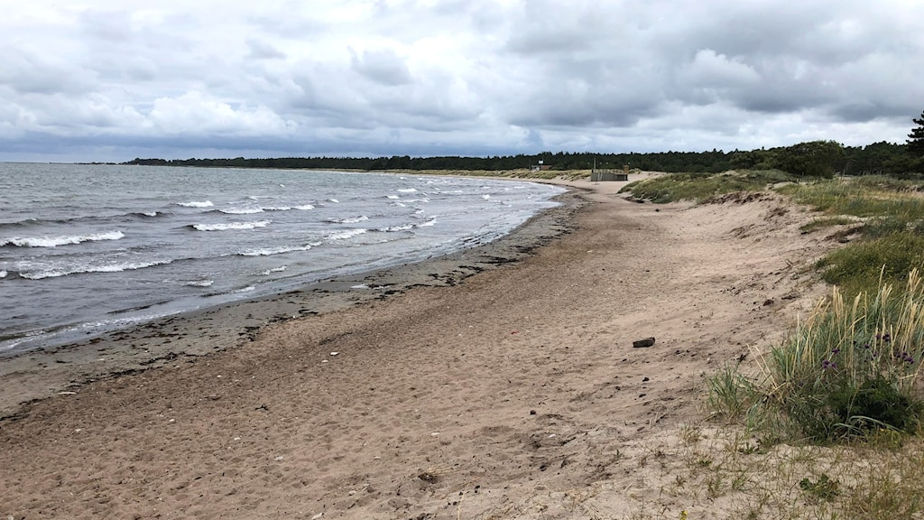 Bilden visar Tofta strand efter rensning från släke.