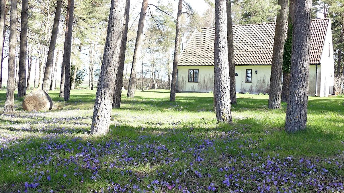 Vahlgrens trädgård i Viklau.