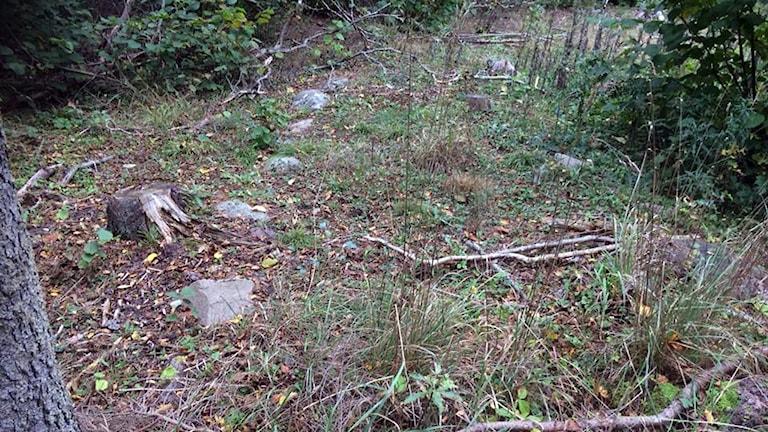 Järnåldersväg i Vall som Caroline Bernander hittade under en löprunda.