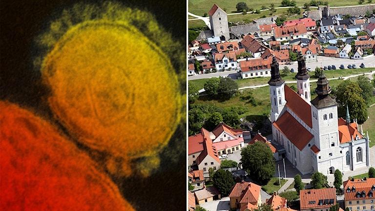 Till vänster en mikroskopbild på coronaviruset, till höger flygbild över Visby domkyrka och Visby innerstad.