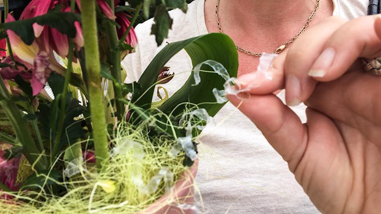 Lucinda Rydqvist visar plast som suttit runt blomstjälken