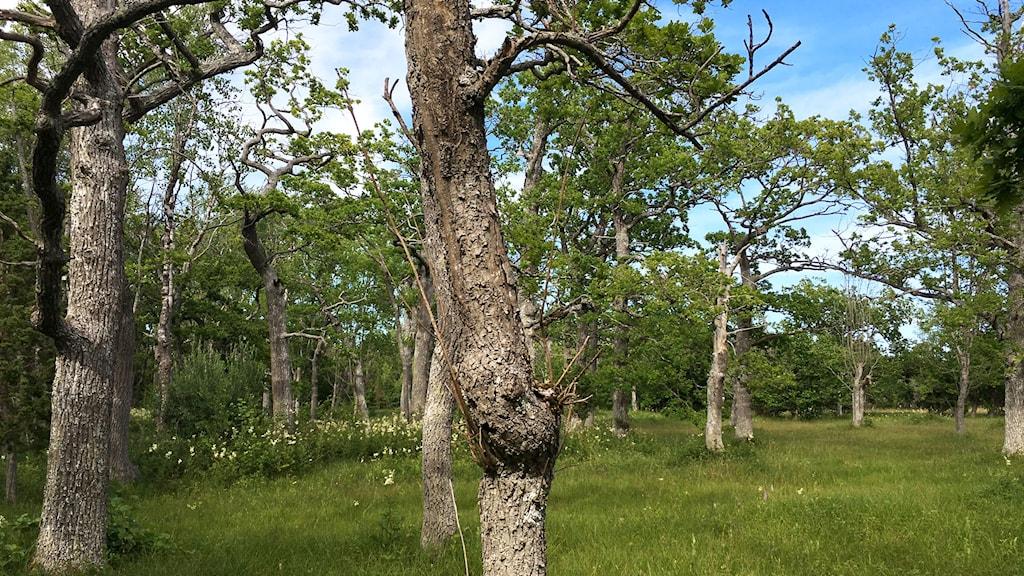 Natur fladdermössen gillar. Foto: Espen Jensen