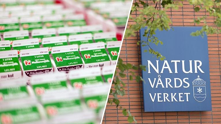 Naturvårdsverket, Arla, Visby.