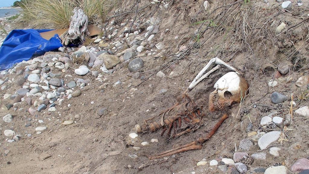 Skelett på Gotska sandön