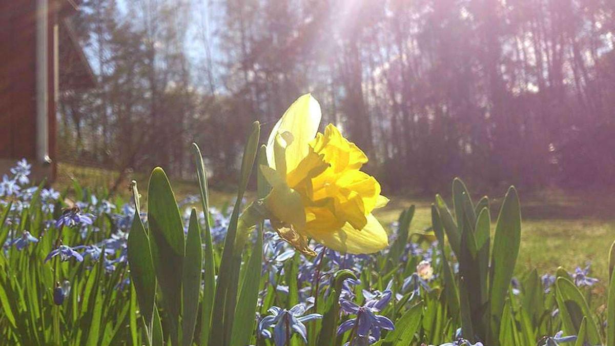 Påskdagens gudstjänst handlar om uppståndelsens glädje.