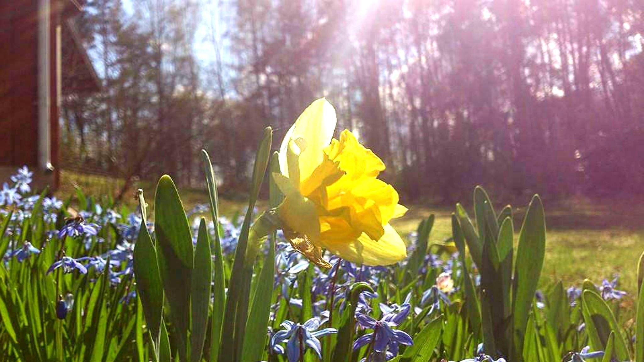 Påskdagens gudstjänst handlar om uppståndelsens glädje. Foto: Katarina Josephsson.