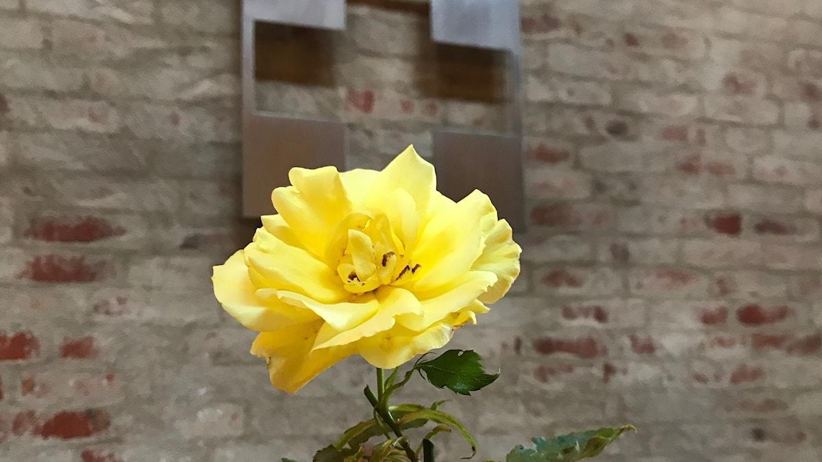 En ros i Nicolaikapell