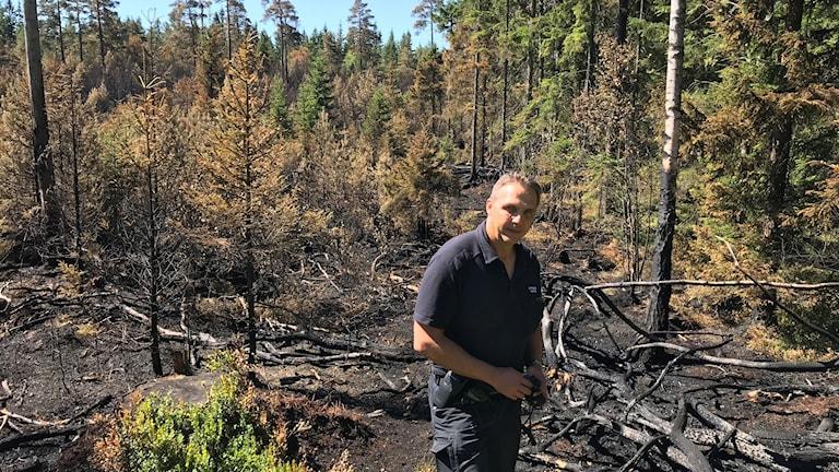 Insatsledare för Södra Älvsborgs Räddningsförbund Mauri Sköld framför en släckt skogsbrand i Geselbo.