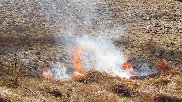 Det blir allt torrare i markerna, och risken för gräsbränder är nu mycket stor. Foto: Pär Sandin.