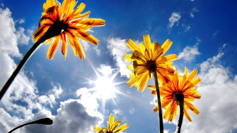 Blomma mot himmel