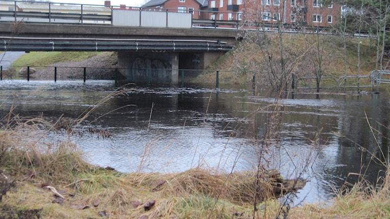 Översvämning i Svenljunga. Foto: Jenny Hellström