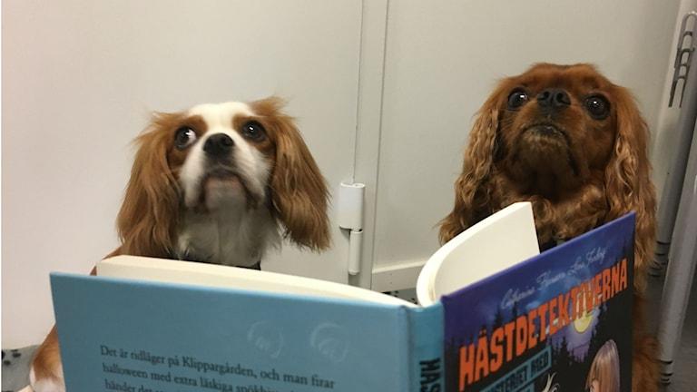 Hundarna Milla och Mållgan sitter och tittar i en bok. Mållgan är till höger och Milla till vänster.