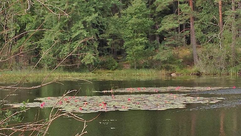 Pickesjön utanför Borås. Foto Maria Hansson