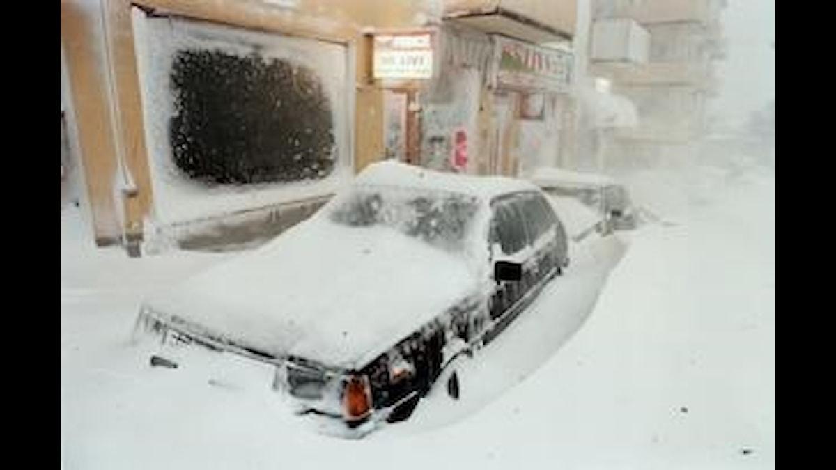 Bild från stormen i november 1995. Foto: Sveriges Radio.