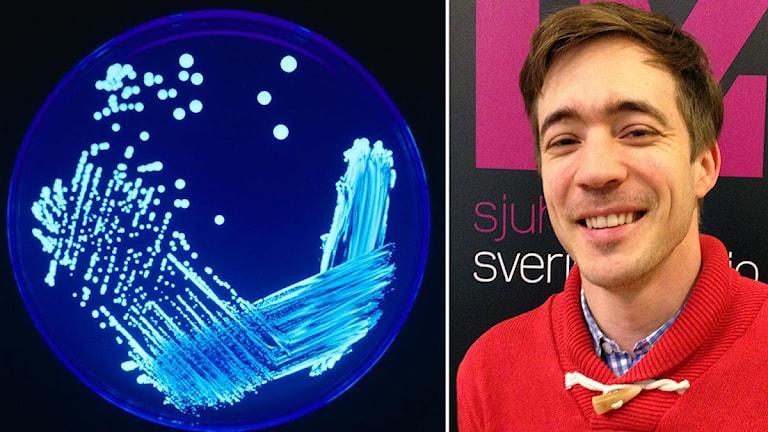 Legionellabakterie och Jesper Hedin på Statens forskningsanstalt, SP. Foto: CDC/James Gathany.