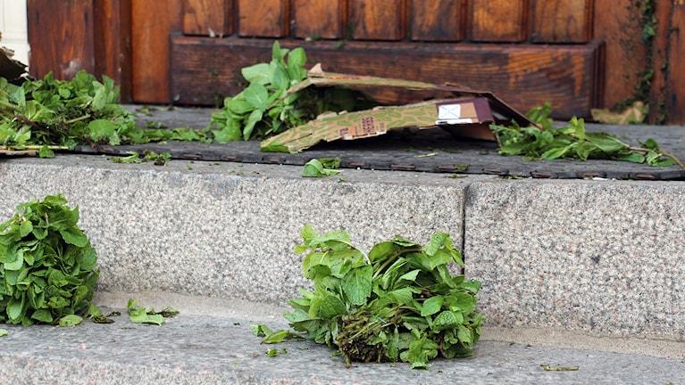 Paketet på Norra Hallands trappa innehöll mynta. Foto: Norra Halland/Ann Kristin Ekman.