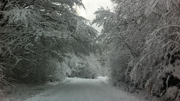 Snöig väg. Foto Sara Kvist