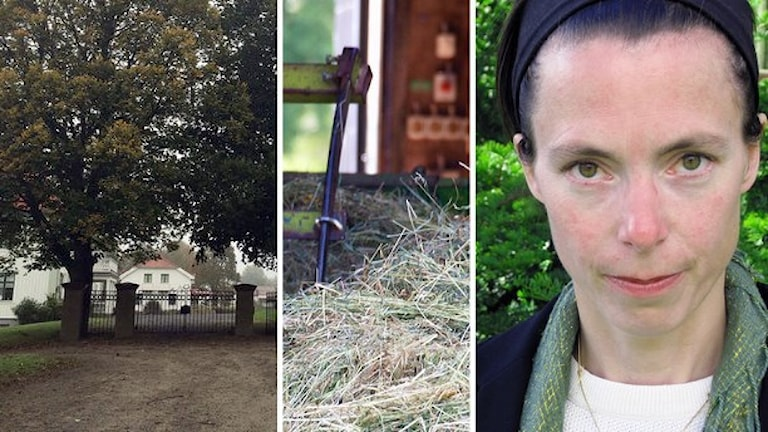 Strömma naturbruksgymnasie och  Birgitta Losman (Mp). Foto: Sveriges Radio.
