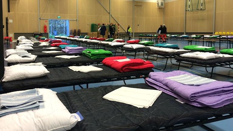 Tältsängar i Lundbyhallen. Foto: Melissa Gustafsson/SR