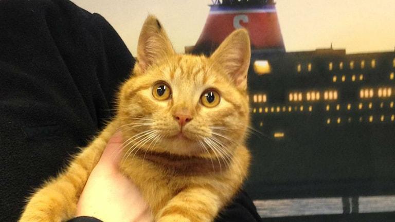 Upphittad katt Foto: Stena Line