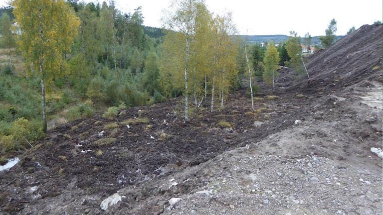 Slänten där stora jordmassor har tippats. Foto: Peter Nolbrant/privat