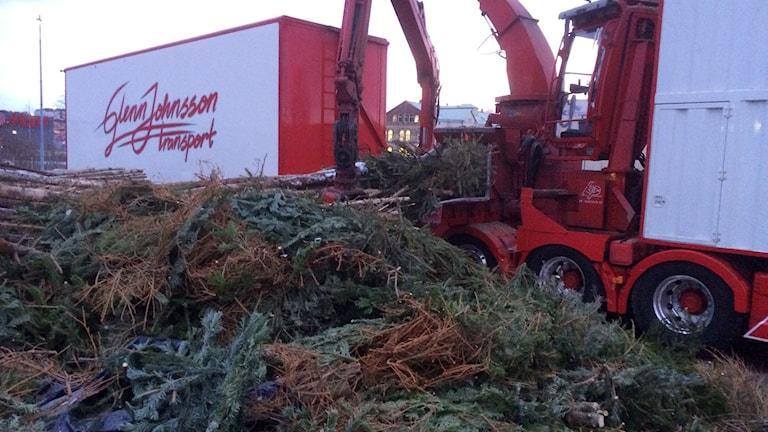 Julgranar blir värme hos Borås energi och miljö. Fofo: Niclas Odengård