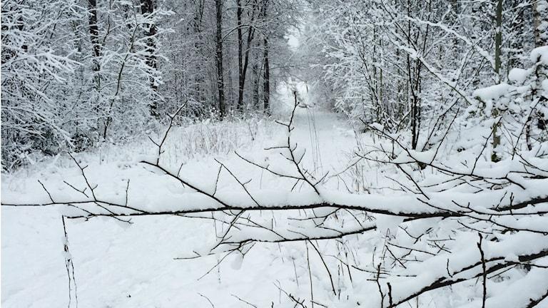 Ett kallt och vintrigt Fristad. Foto: Sarit Monastyrski / SR.