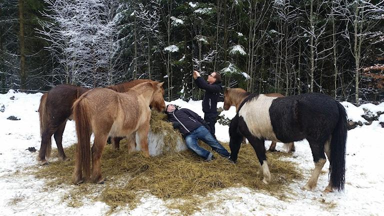 Jon och Tommy umgås med hästar utomhus i snön