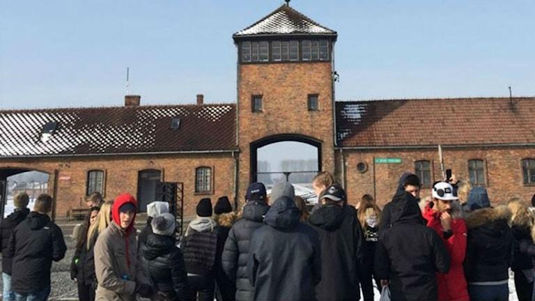 Tranemoelever i Auschwitz