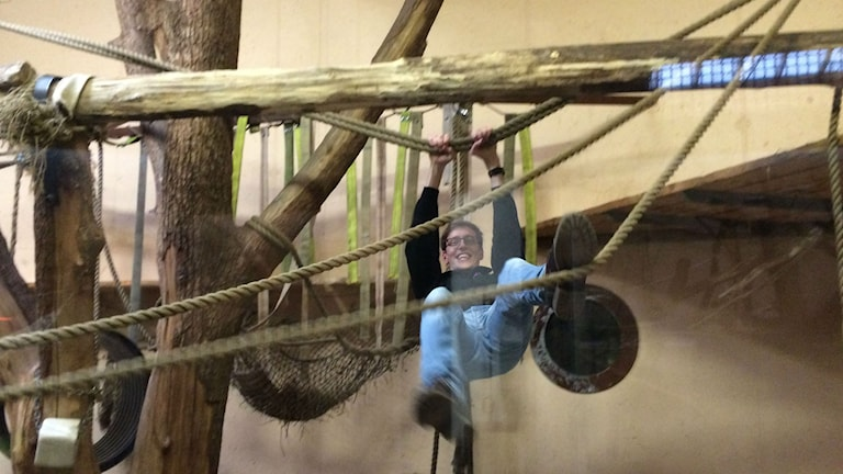 Marcus Léonarde svingar sig i apornas rep. Foto: Karin Ivarsson / SR