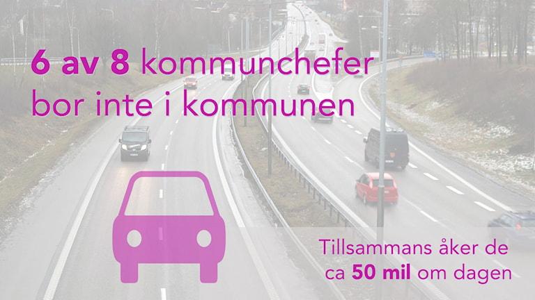 Grafik: 8 av 8 kommunchefer bor inte i kommunen. Tillsammans åker de 54 mil om dagen.