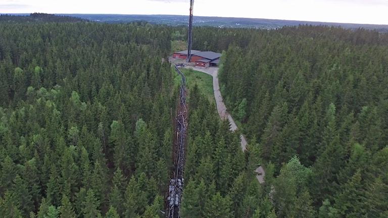 Skog och telemast som har brutits