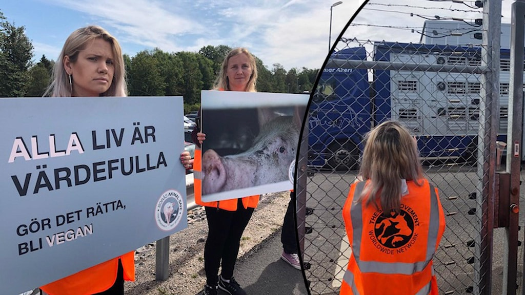 Två kvinnor håller upp skyltar och en står och tittar på en lastbil.