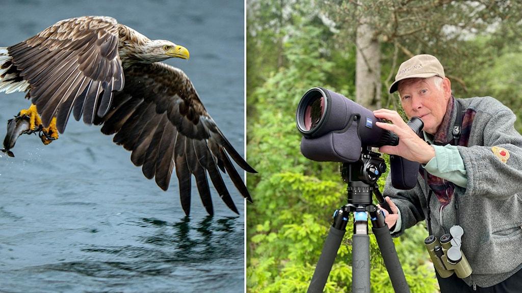 Claes-Göran Ahlgren, ornitolog med en tubkikare.