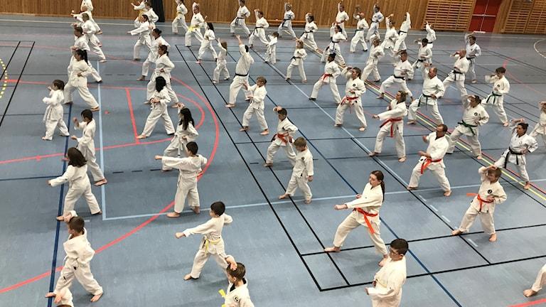 karateläger borgstena