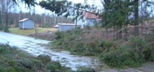 Riksväg 27 vid Aplared efter stormen i januari 2005. Foto: Lena Löfgren